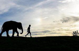 Adam_elephant_small
