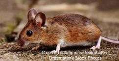 mouse_credit