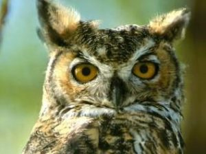owl_blog