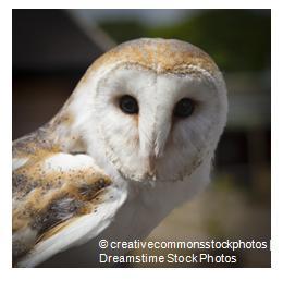 owl_credit